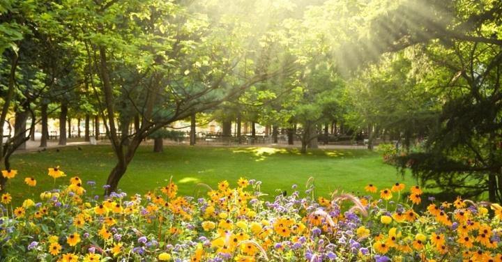 primavera-flor-jardim-1348250401278_956x500